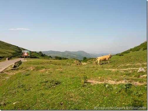 PoluxCriville-Stray_Bullet-Valle_Cabuerniga-moto-ruta (4)