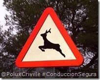 PoluxCriville-Via-Lavozdegalicia.es-moto-señal-animales-sueltos