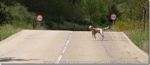 PoluxCriville-LosViajesDeBrujilda.com-rutas-moto-animales-conduccion-segura