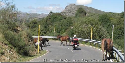 PoluxCriville_Via_AnayaTouring.com-conduccion-segura-moto-animales