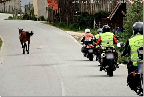 PoluxCriville-Via_AMM-Juan Carlos Toribio_moto-animales-ruta-peligro