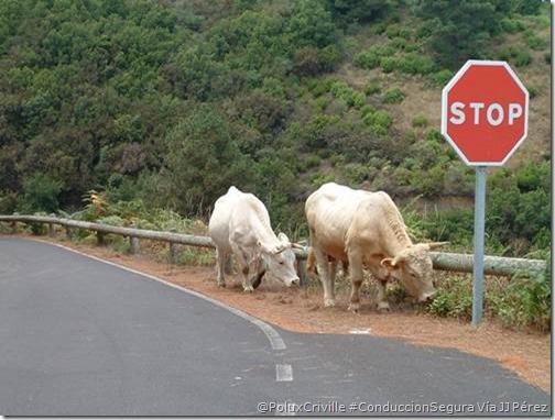PoluxCriville-Via_José Javier Pérez Martín-moto-carreteras-comarcales-locales-animales-sueltos-peligros