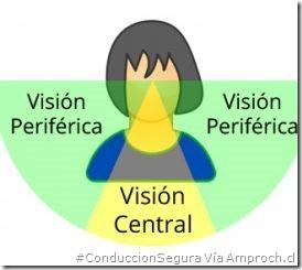 PoluxCriville-Via-amproch.cl-Vision-periferica_se-reduce-a-mayor-velocidad-